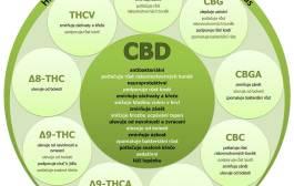 Kanabidiol – CBD