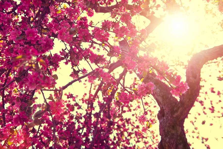 Jarní energie a zdraví