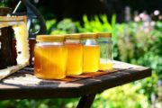TIP: Kde nakupovat lokální, čerstvé a sezónní potraviny?