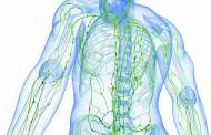 Očista lymfatických cest – krok šestý