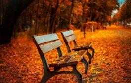 Jak posílit imunitu před příchodem podzimu