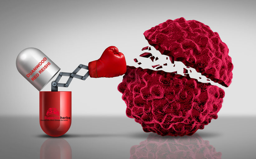 Rakovina a léčivé houby – co říká současný výzkum